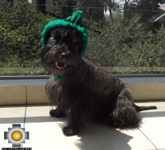 Alpaca Hat for Dogs Puppy Elf - Product id: dog-clothing-14-04 Photo04