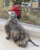 Alpaca Hat for Dogs scottish elf - Product id: dog-clothing-11-02 Photo05