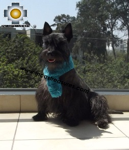 Alpaca Scarf for dogs Alqu - Product id: dog-clothing-15-01 Photo04