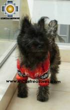Dog Alpaca Sweater Sumaq - Product id: dog-clothing-10-04 Photo02