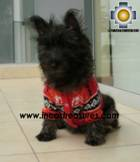 Dog Alpaca Sweater Sumaq - Product id: dog-clothing-10-04 Photo06
