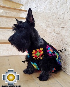 Alpaca Vest for Dogs Flower