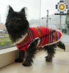 Dog Clothing Apparel Inka - Product id: dog-clothing-10-05 Photo04