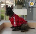 dog clothing jacket peru - Product id: dog-clothing-11-04 Photo01