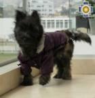 Dog Jacket with Hood ROBIN - Product id: dog-clothing-10-01 Photo05