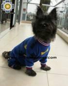 Dog Sleepwear Huesitos - Product id: dog-clothing-10-03 Photo03