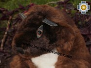 Alpaca Stuffed Animal -justin-beaver - Product id: TOYS12-02 Photo01