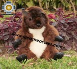 Alpaca Stuffed Animal -justin-beaver - Product id: TOYS12-02 Photo03