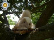 Alpaca Stuffed Animal Squirrel Nuez - Product id: TOYS08-57 Photo03