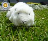 Adorable Stuffed Animal  - Fantastic Guinea Pig - Product id: TOYS08-54 Photo01