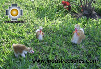 3 beautiful Vicunas resting, 3 sizes - Product id: TOYS08-kit2