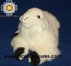 Baby Alpaca Cute Little Sheep - Dolly , photo 01