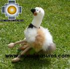 Cute and Elegant Ostrich - Puqui , photo 05